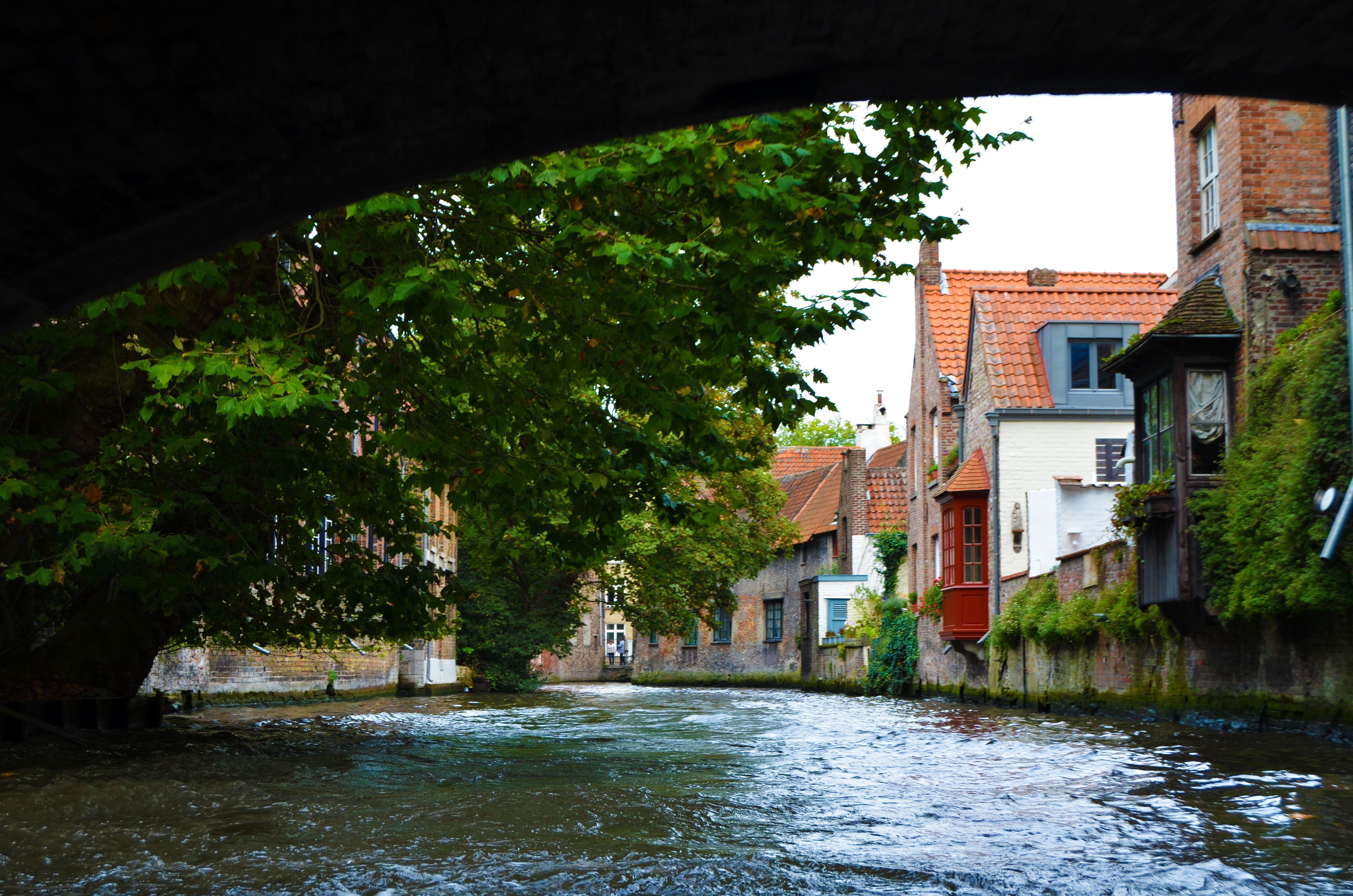 Canal Brujas