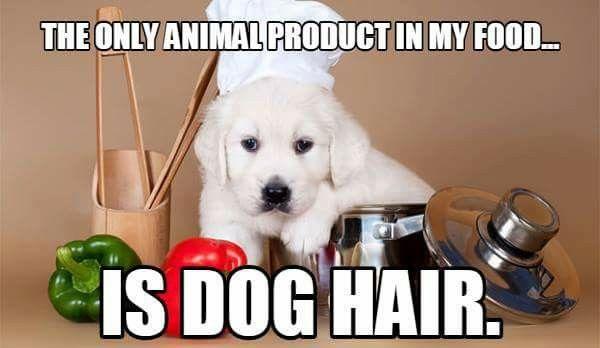 Hungry Dog Meme Dog Memes Dog Puns Best Senior Dog Food