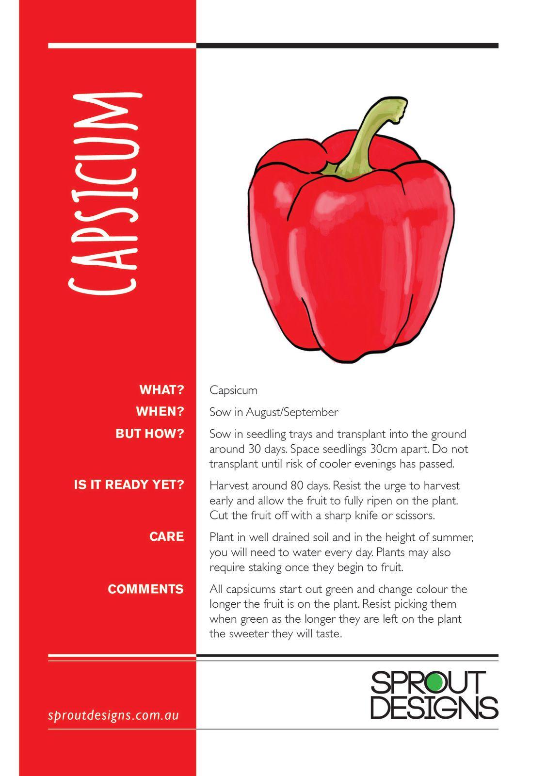 Capsicum planting guide growing capsicum capsicum