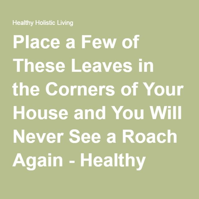 Place a Few of These Leaves in the Corners of Your House and You Will Never See a Roach Again - Healthy Holistic Living