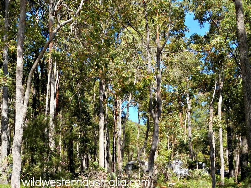 Potters Gorge A Campsite By Wellington Dam Camping In