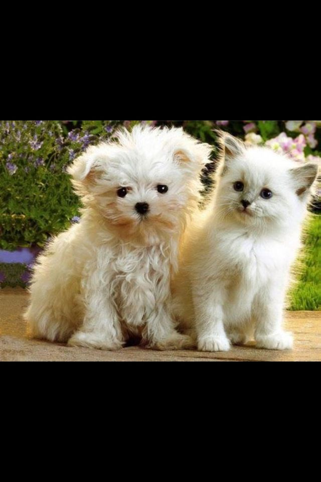 Kitten and puppy Cute puppies and kittens, Kittens and
