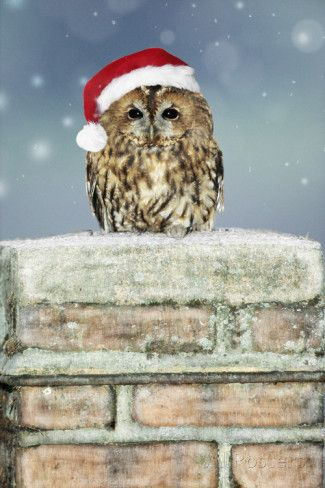 Tawny Owl Sitting on Snowy Chimney Wearing Christmas Hat Valokuvavedos AllPosters.fi-sivustossa