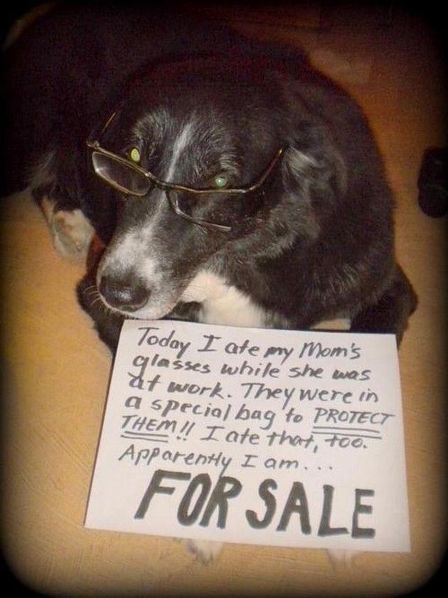 Funny Pet Shaming 11 Pics Vitamin Ha Animal Shaming Dog