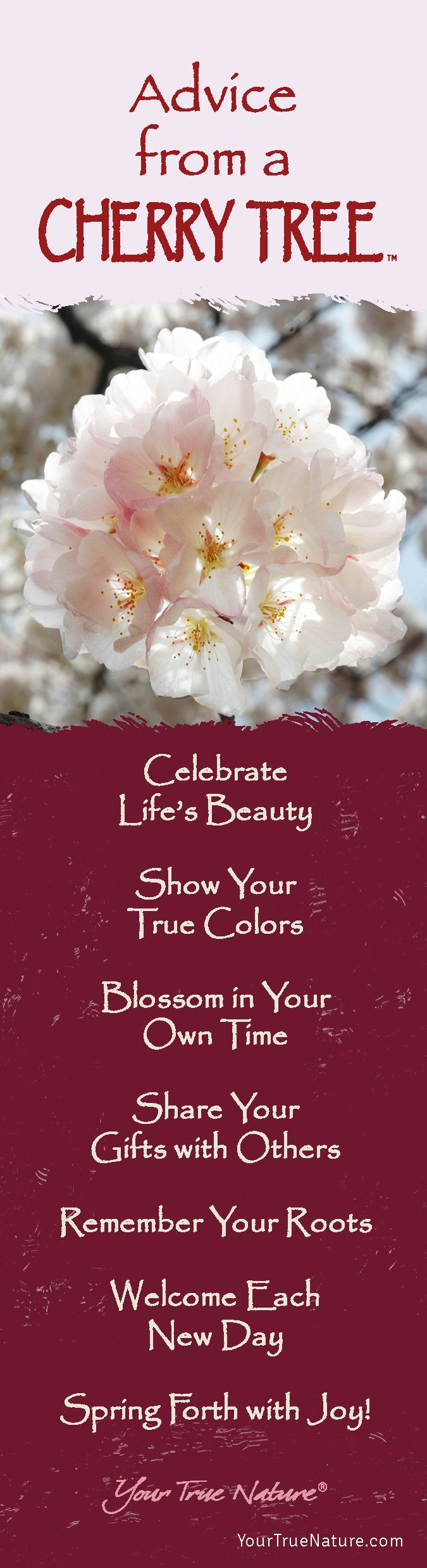 Mother Advice From A Cherry Tree Remember Your Roots Your True Nature Good Advice Advice Cherry Tree