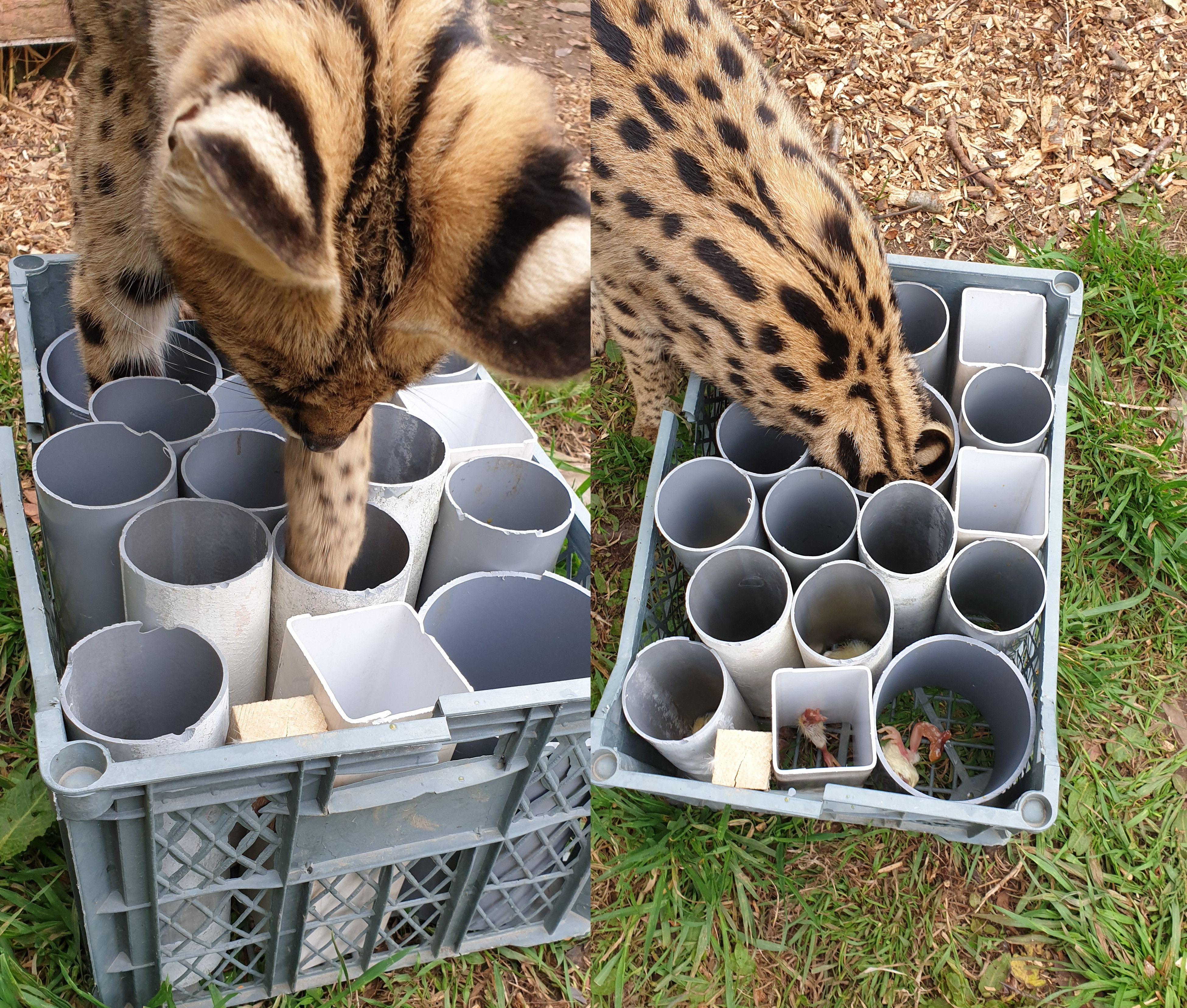 Tube Feeder Enrichment Enrichment Projects Wild Animals Photos Enrichment Activities