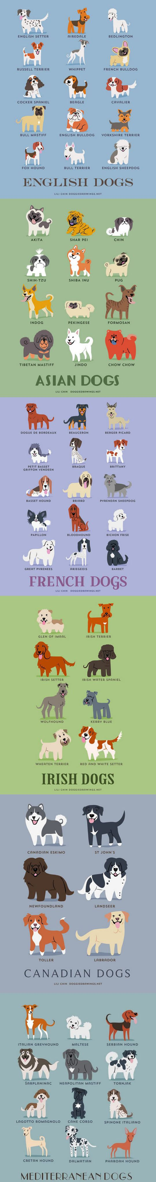 Dogs of the world dog stuff pinterest dogs dogs of the world