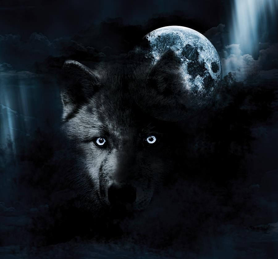 wolf in black and - photo #45