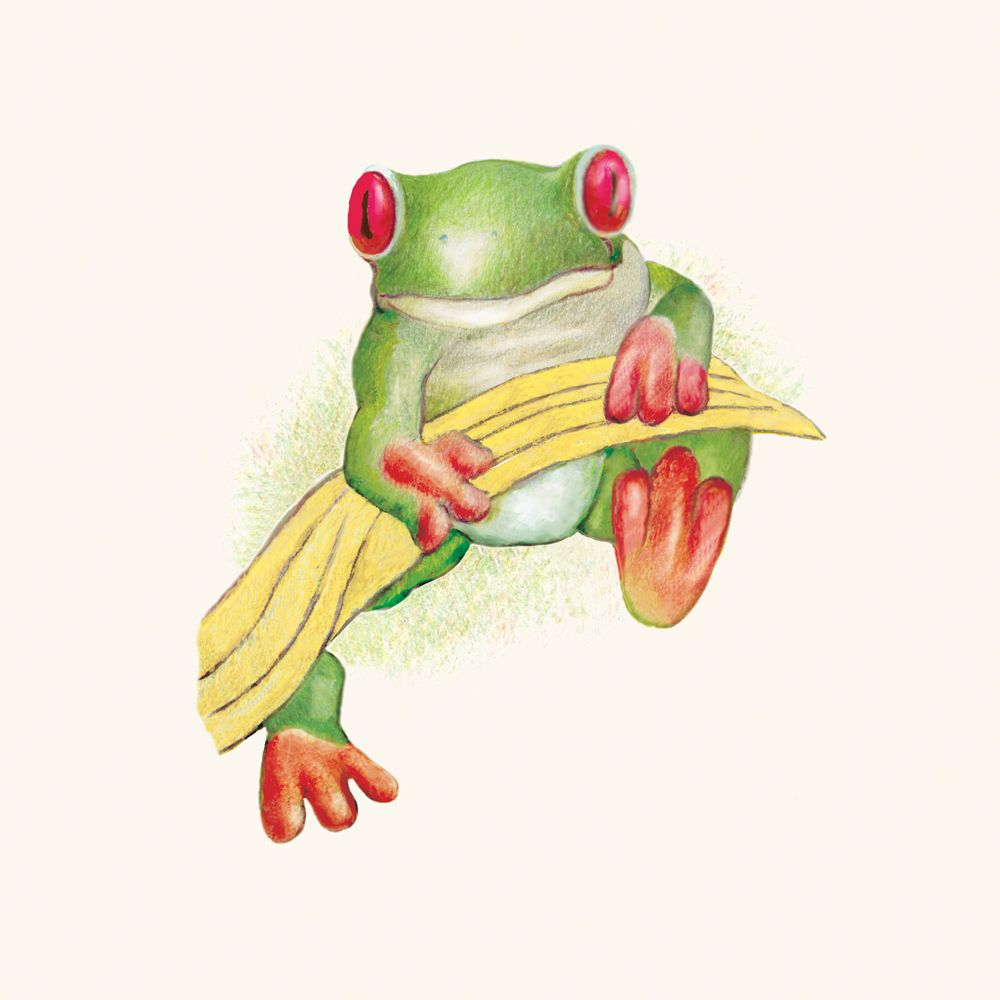 Uncategorized How To Draw A Red Eyed Tree Frog red eyed tree frog of the rainforest drawing by mark lerer http http