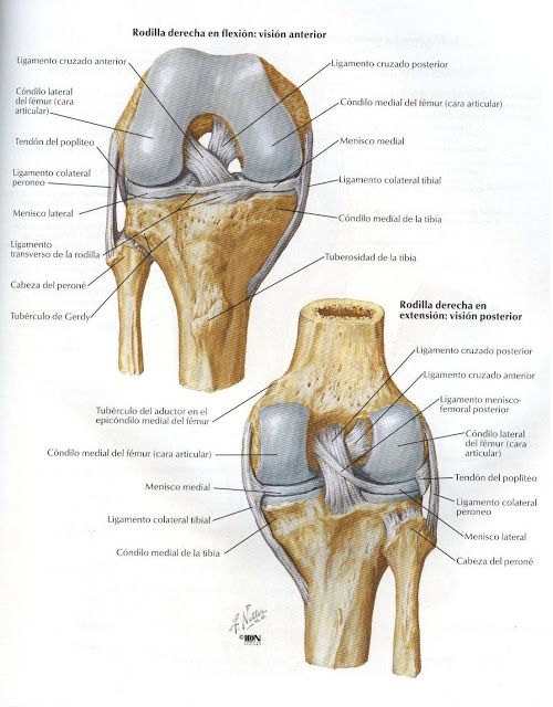 Crditos A Atlas De Anatoma Humana Netter 2da Edicin Anatomia