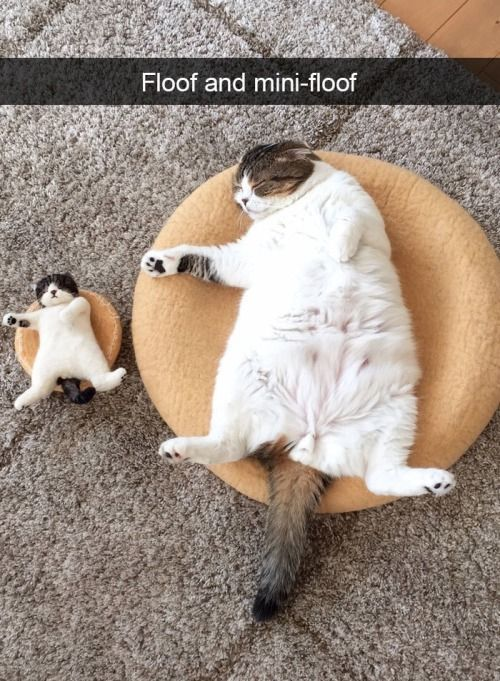 30 funny cats to brighten your day  Tiere Bilder