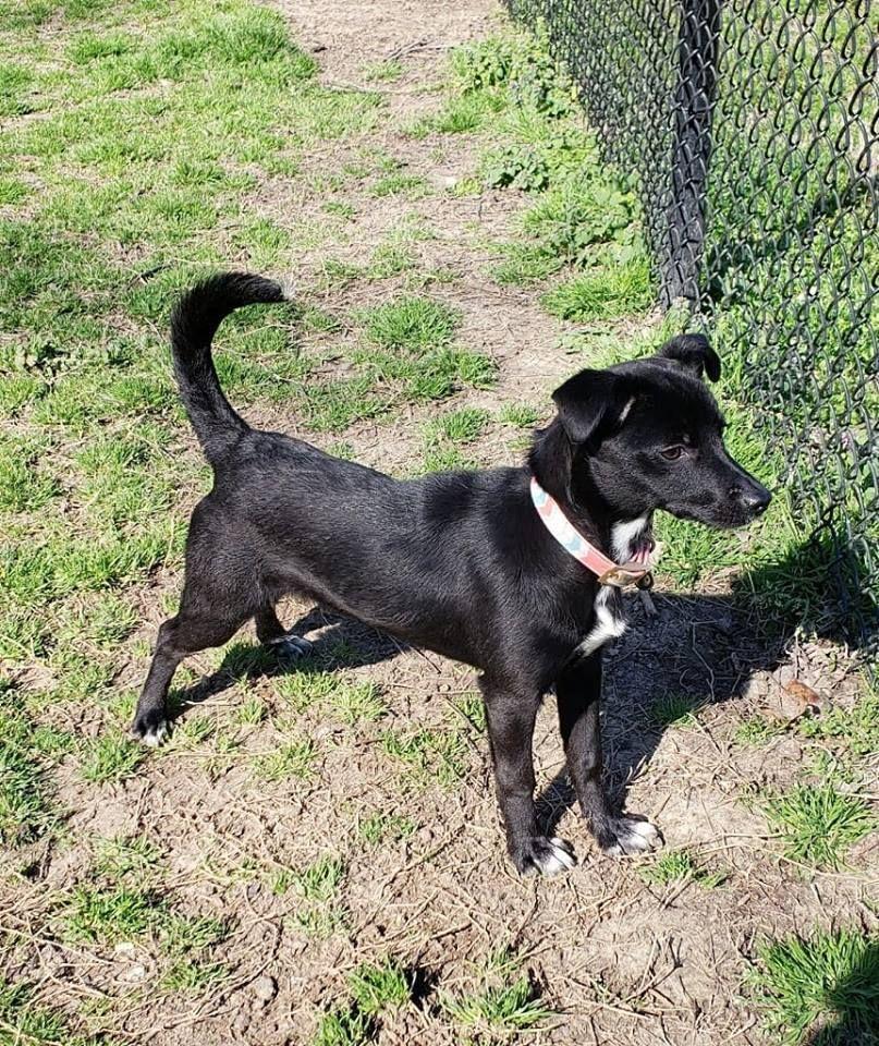 Adopt Dehlia On Dachshund Mix Adoption Pets