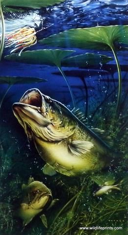 Artist Dan Hatala Unframed Fishing Print Great Lakes Largemouth Bass Largemouth Bass Fishing Pictures Fish