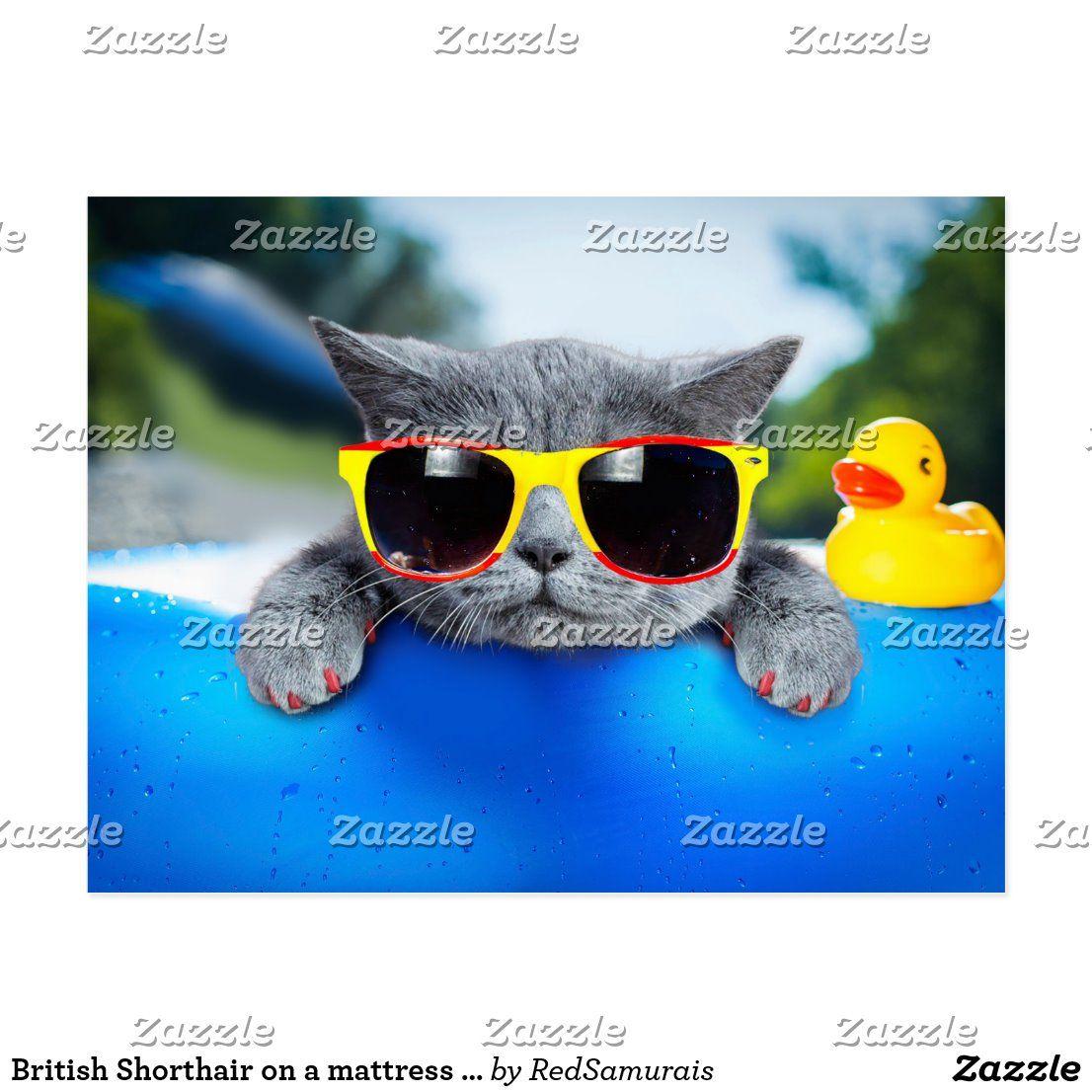 British Shorthair on a mattress in the beach Postcard