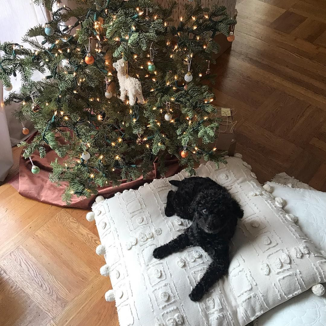Meet Frankie She S Our New Lil Christmas Friend If You Zoom And Squint You Might Be Able To See Her Face Christmas Cards Christmas Christmas Tree Skirt