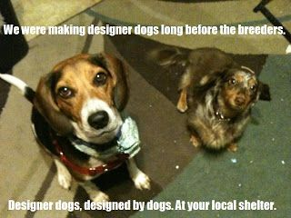 Image Result For Beagle Birthday Memes Rescues Pinterest Dogs