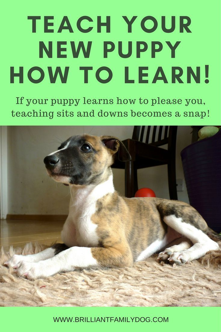 New Puppy? First teach her how to learn! Dog training