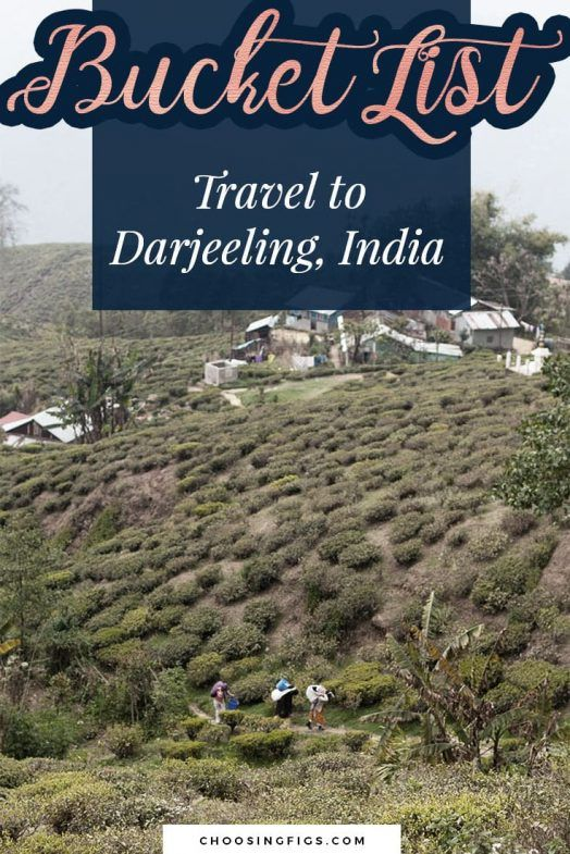 Darjeeling Unlimited Things to do in Darjeeling, India