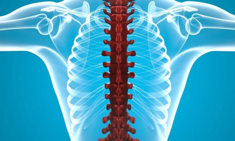 علاج التهاب النخاع الشوكي بالأعشاب الطبيعية Spinal Cord Spinal Cord Injury Spinal