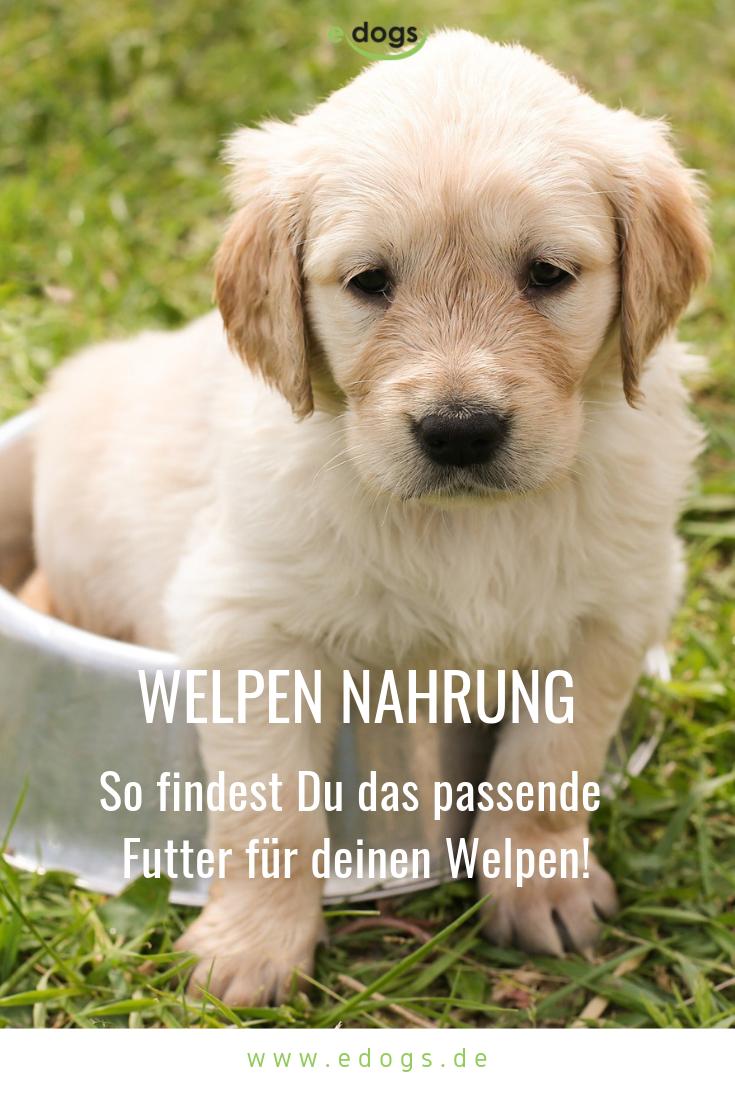 Welpen Ernahrung Welpen Hunde Futter Deutsche Dogge Welpen