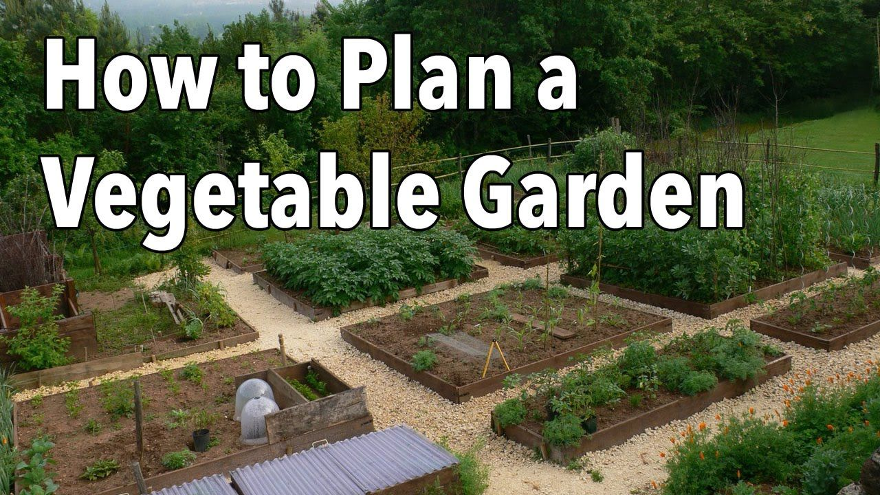 The Basics of Ways To Grow Your Perfect Vegetable Garden