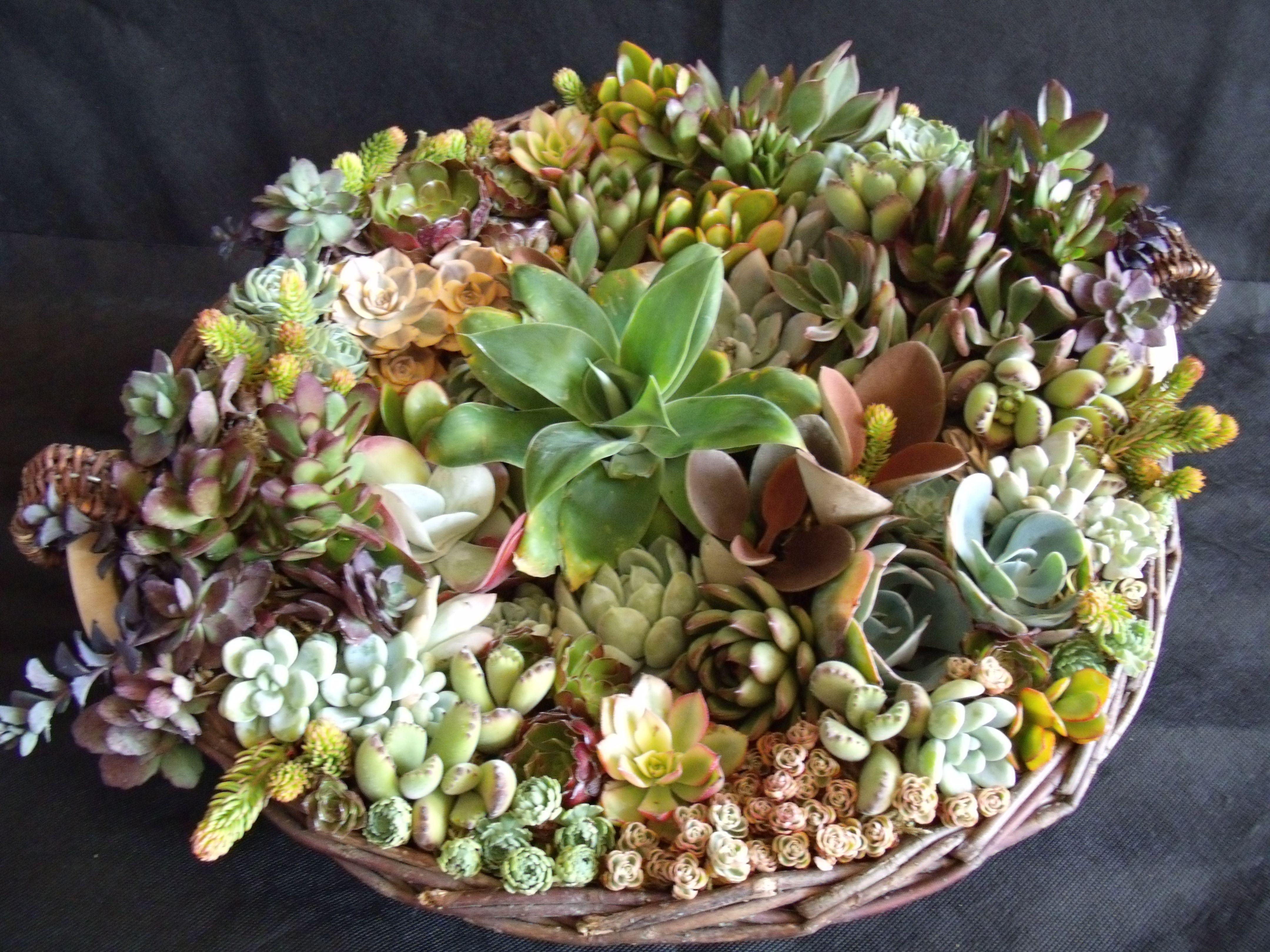 Basket osucculents PhotoDesigner Laura Eubanks at Design For