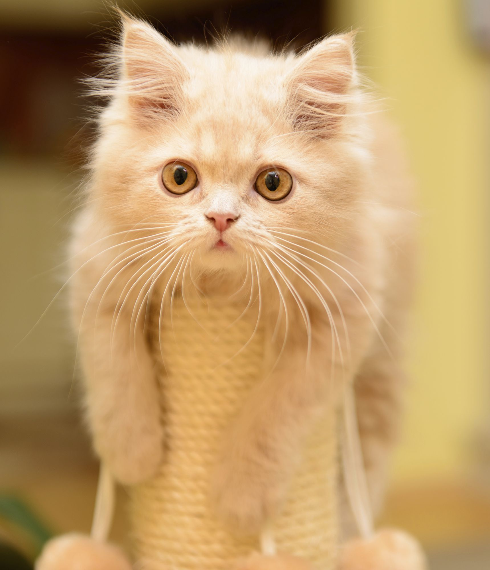 The Top Pet Hacks For Your Apartment Cat Scratching Post Cats Pets