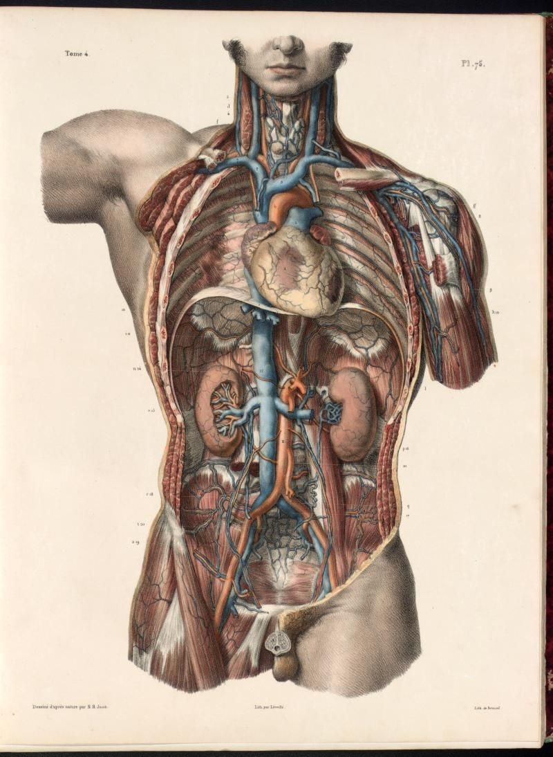 Anatomia Collection Uoft Libraries Plate Description Images I