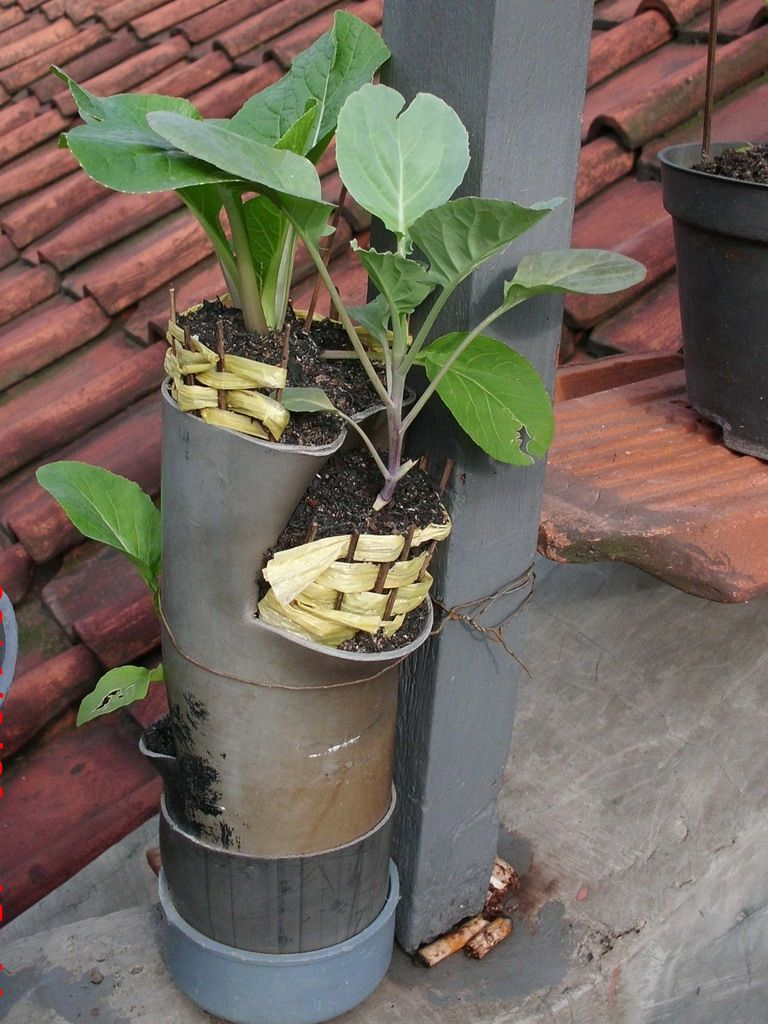 Pin oleh enru thea di Urban Farming RW04 Bandung