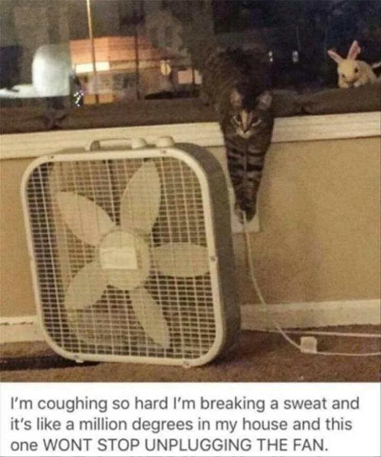18 Funny Animal Pictures