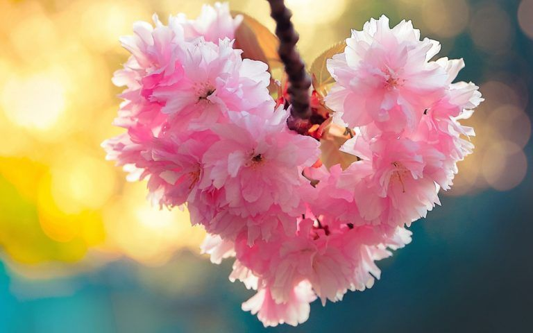 Flowers Heart Bloom Spring Love Nature Image Of Nature Nature Images Love Flowers Beautiful Flowers