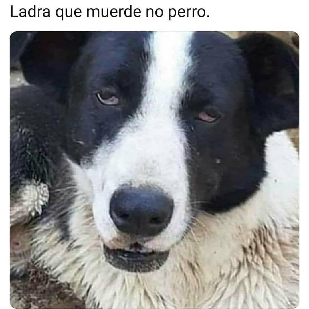 2 795 Me Gusta 17 Comentarios Humor En La Nube Humorenlanube En Instagram Memes Divertidos Meme Gracioso Perros