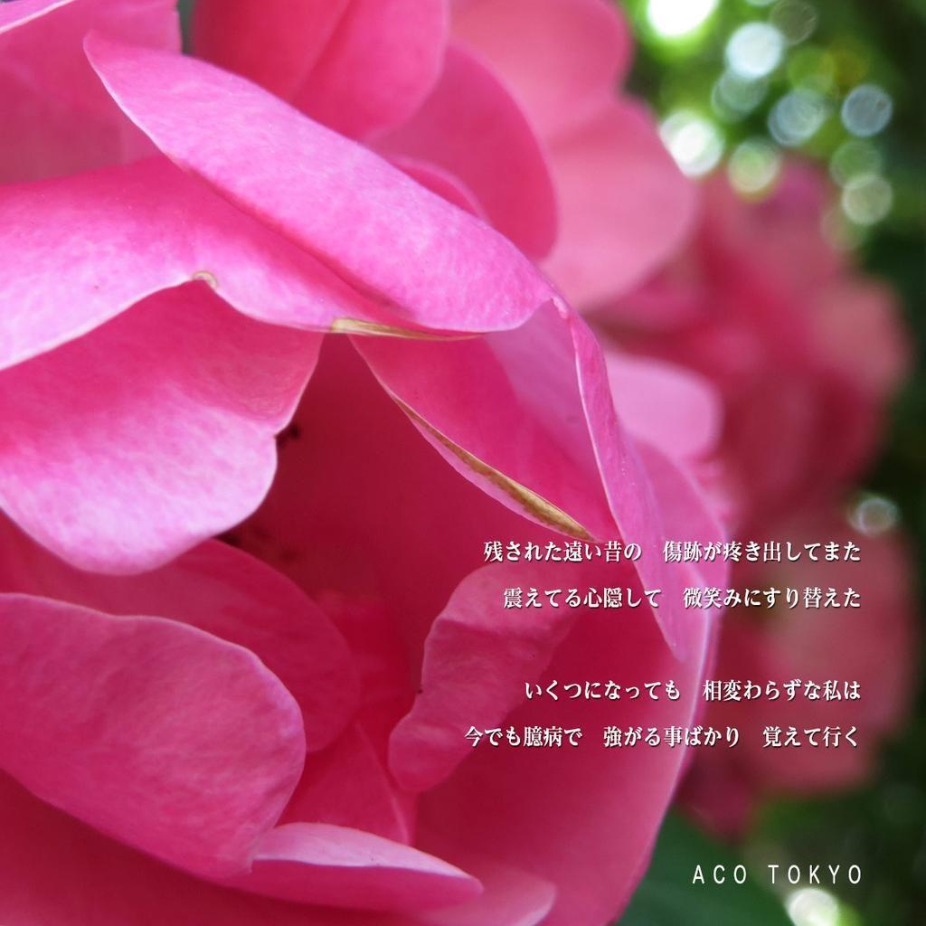 悲しい、もう、使うことが出来ない。しかしのすごい数の薔薇だけど、1枚も、そう、赤い薔薇は、無いのが真実。 #写真 #photo #薔薇 #光 #影 #言葉 #緑 #キラキラ