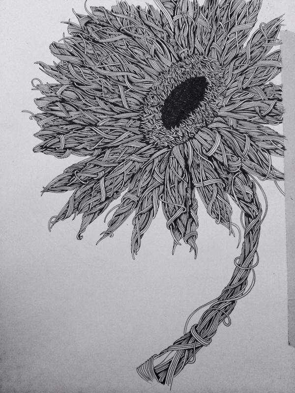 Flower pen drawing by Michael Wheeler