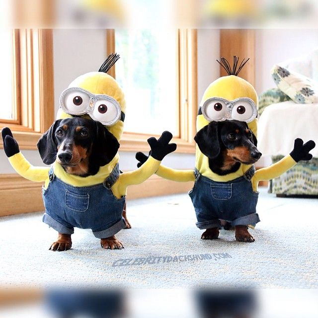 SoooOoooOooo.. Who wants to see a minions video?!?!