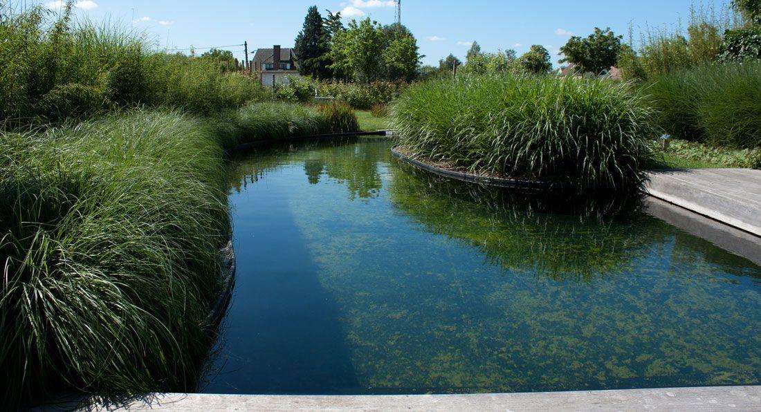 Tuinontwerp met zwemvijver tuinarchitect stefaan willems