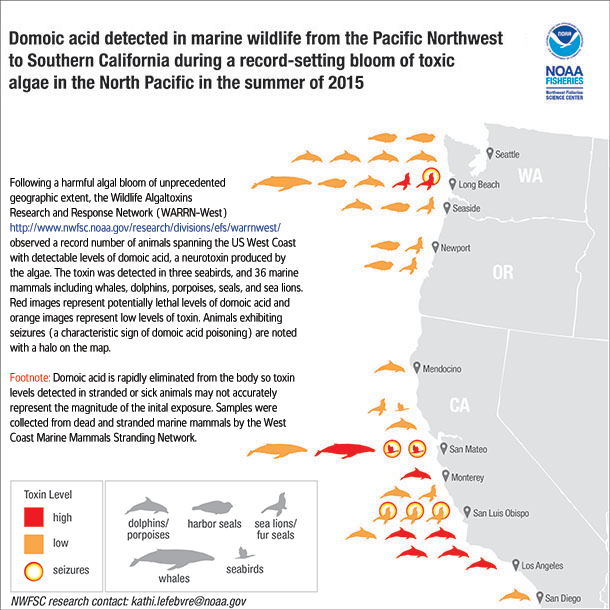 California Closes Dungeness And Razor Clam Fisheries Due To Algal Toxin Noaa Climate Gov California Clams Noaa