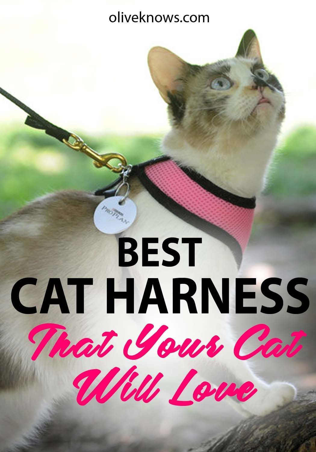 Cat harnesses can help you maintain a strict workout