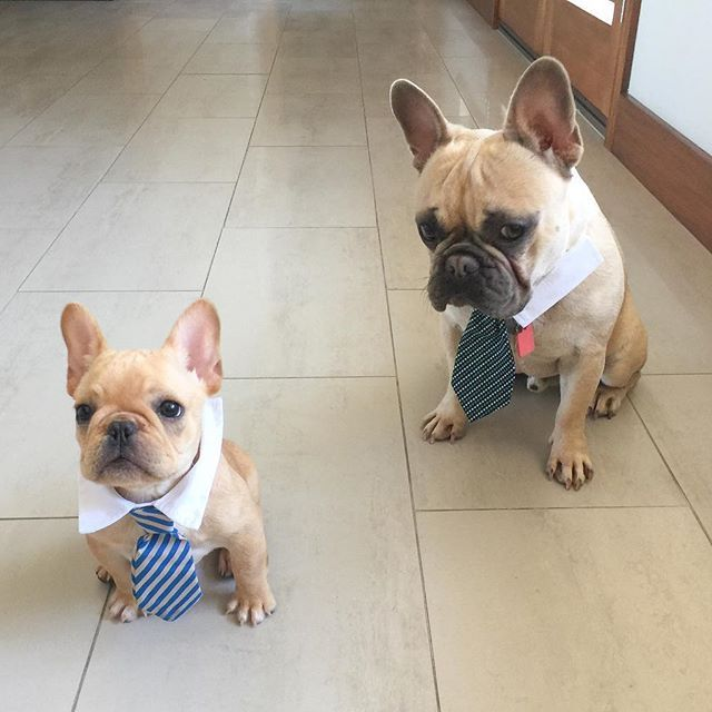 C Mon Alfie Seriously That Tie Is Way Too Long For You