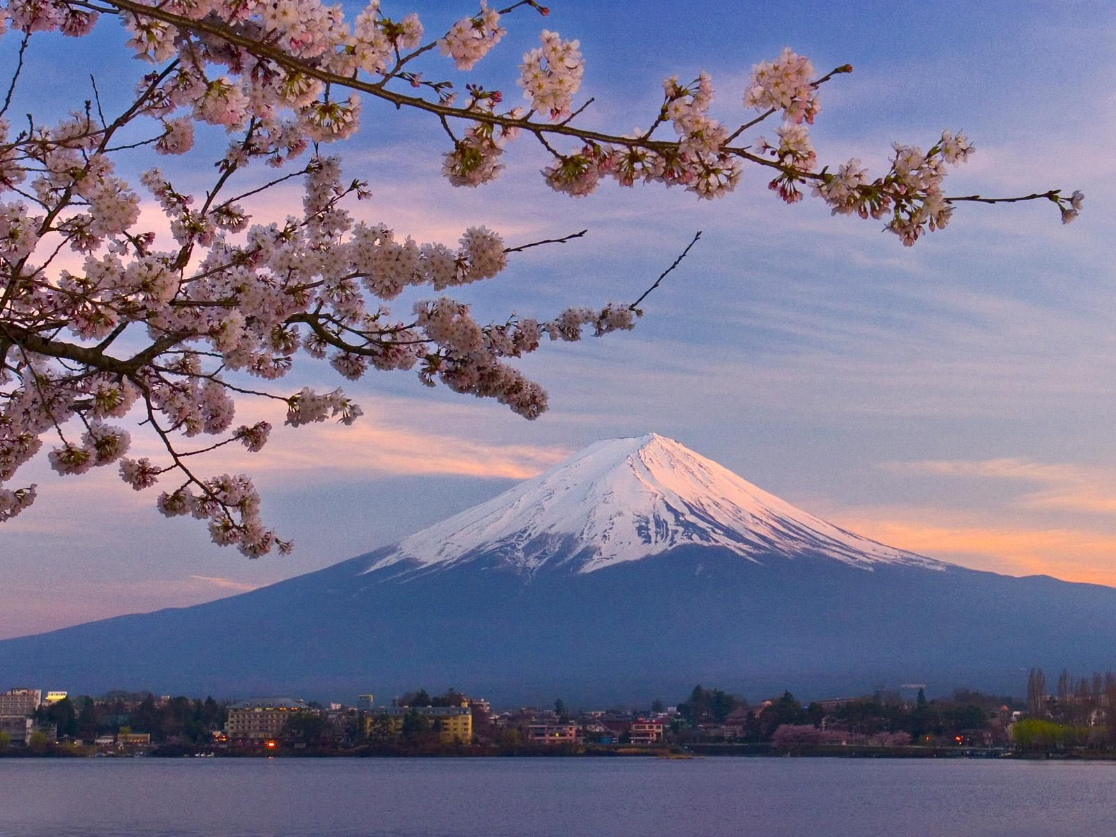 Cherry Blossoms Mount Fuji And Kawaguchi Lake 1600 X 1200 Mount Fuji Japan Mount Fuji Scenery Wallpaper