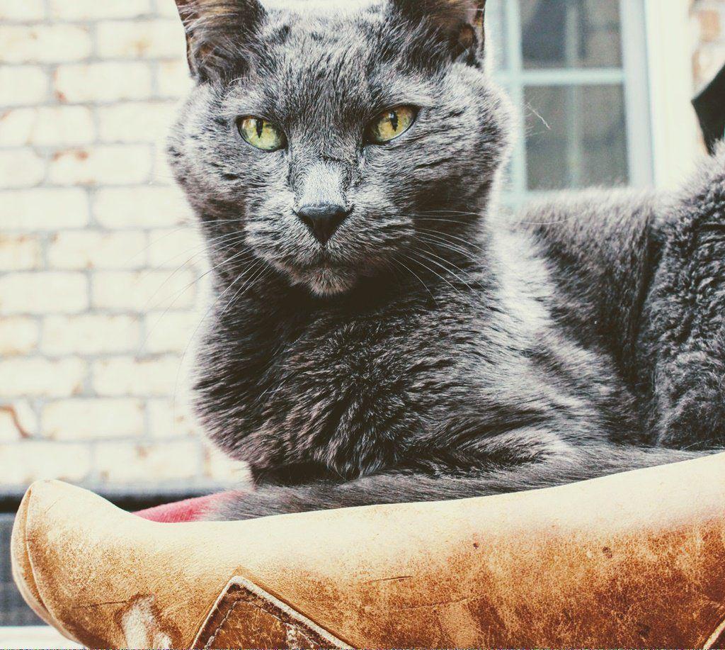 Cats Bus Schedule Docatsdream Post 724214212 Cat Adoption Why