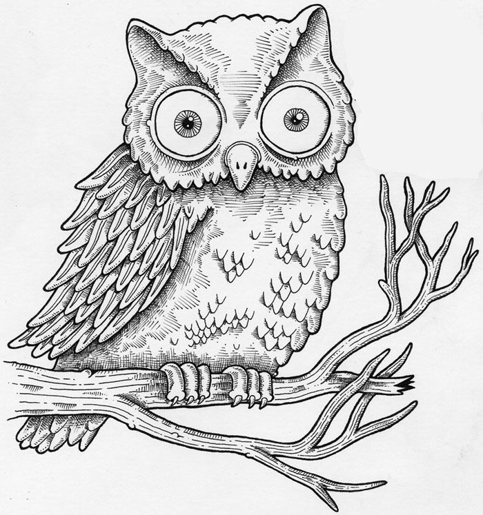Google Searchqbutterfly Coloring Pages