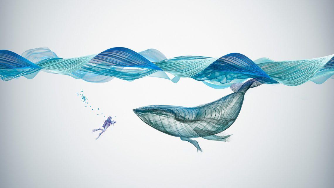 Underwater Whale Illustration Desktop Wallpapers Whale Illustration Whale Drawing Shark Drawing