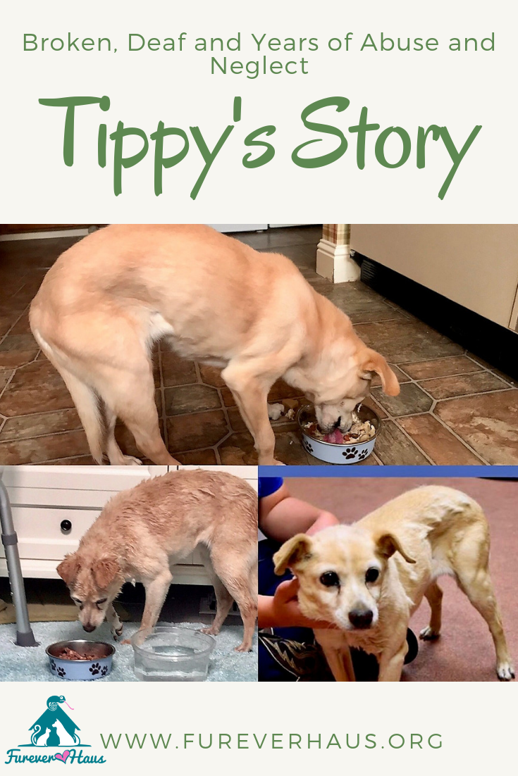 She came to us broken, deaf with neurological damage from years of neglect and untreated injuries from abuse. This is Tippy's Story