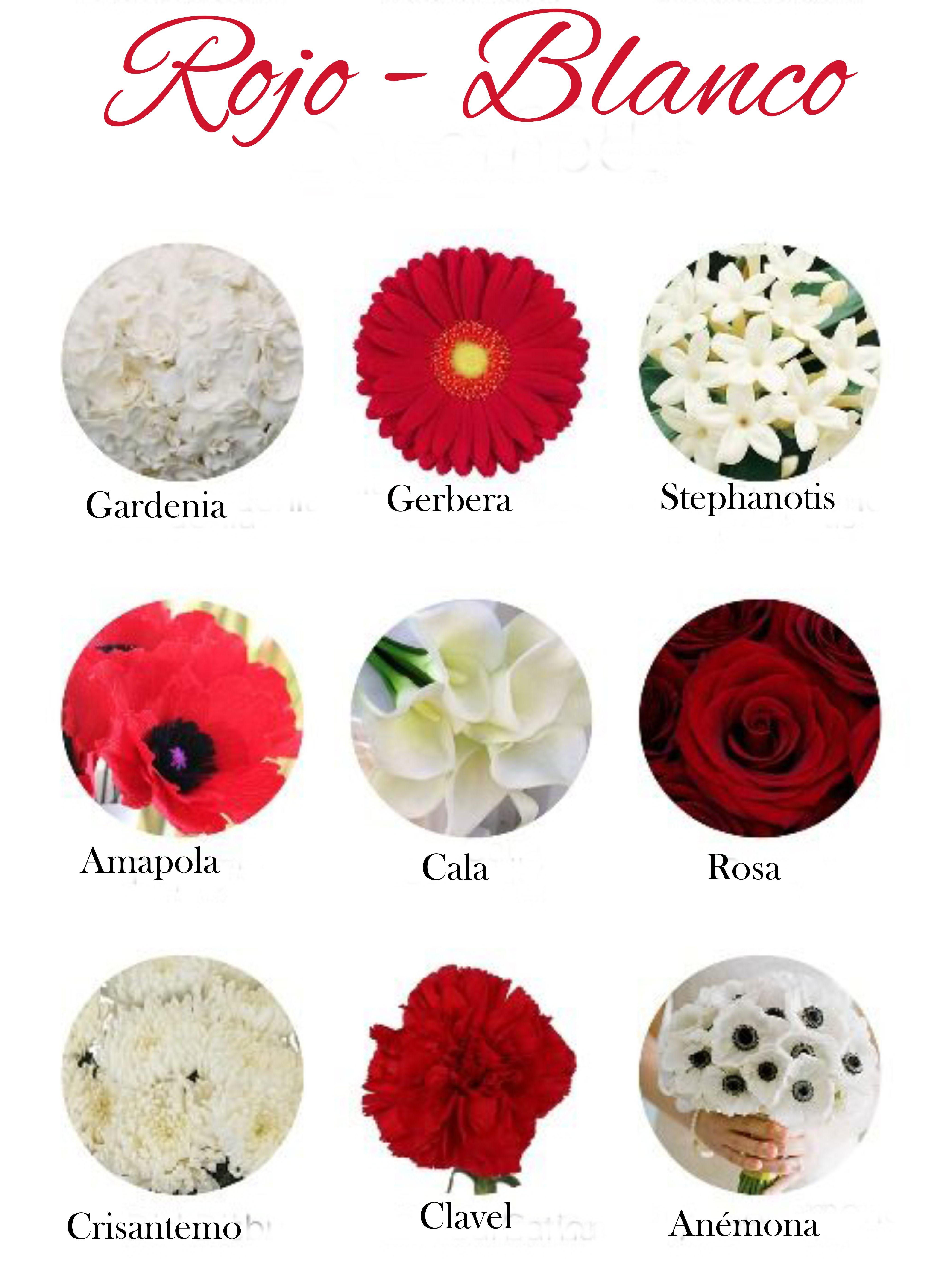Flores de color rojo y blanco red flowers and white - Clases de flores y sus nombres ...