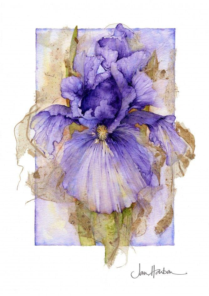 Botanical Illustration by Jan Harbon Beautiful Flower Illustration #flower #illustration #art #beautiful #inspiration #watercolor #botanical #flora