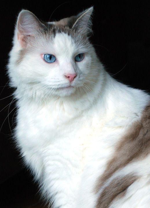 Beautiful Cats, Cats, Animals
