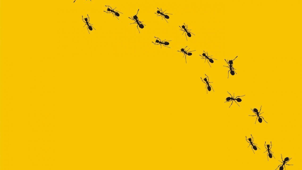 معلومات عن النمل Ants Art