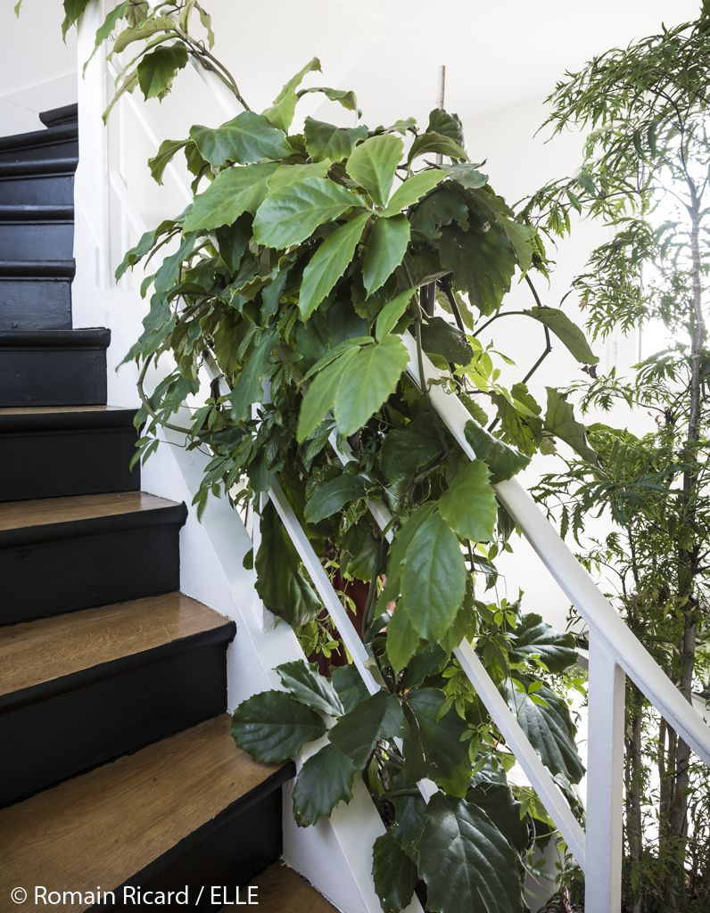 Comment jardiner du balcon au salon les 10 commandements - Deco plante salon ...