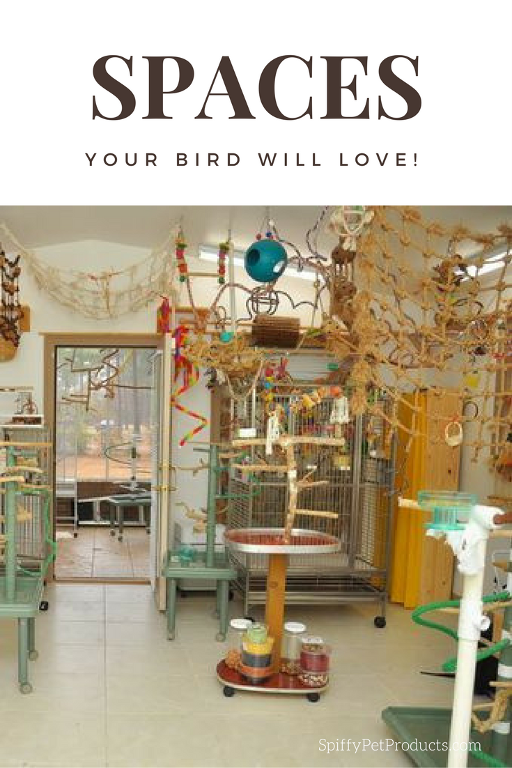 Bird Room Ideas Are Addictive You Have Been Warned Spiffy Pet Products Bird Parrot Toys Diy Stuffed Animals